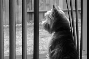 agency watch dog