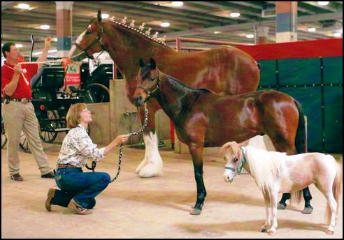 Segmentation of Horses - The Benefits of Segmenting Customers