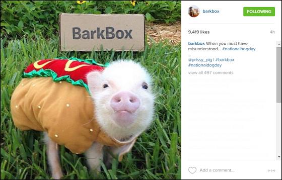 Barkbox Instagram