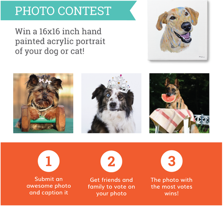 pooch face contest